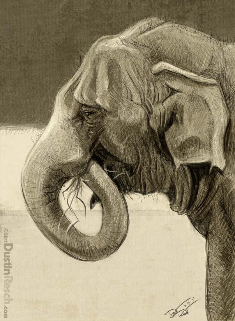 Elephant Head Profile Drawing